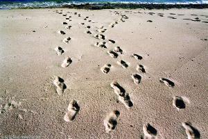 Spuren: Der Weg zum Strand und zurück, Mahe, Seychellen