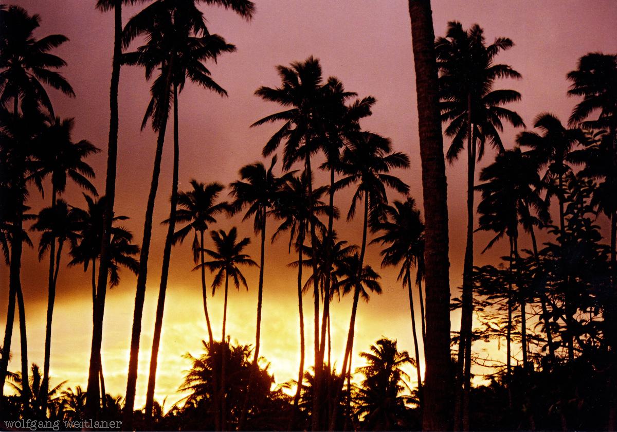 Kokospalmen im Arorangi Village, Rarotonga, Cook Inseln, Südsee