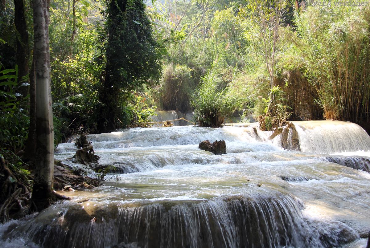 Laos-dschungel
