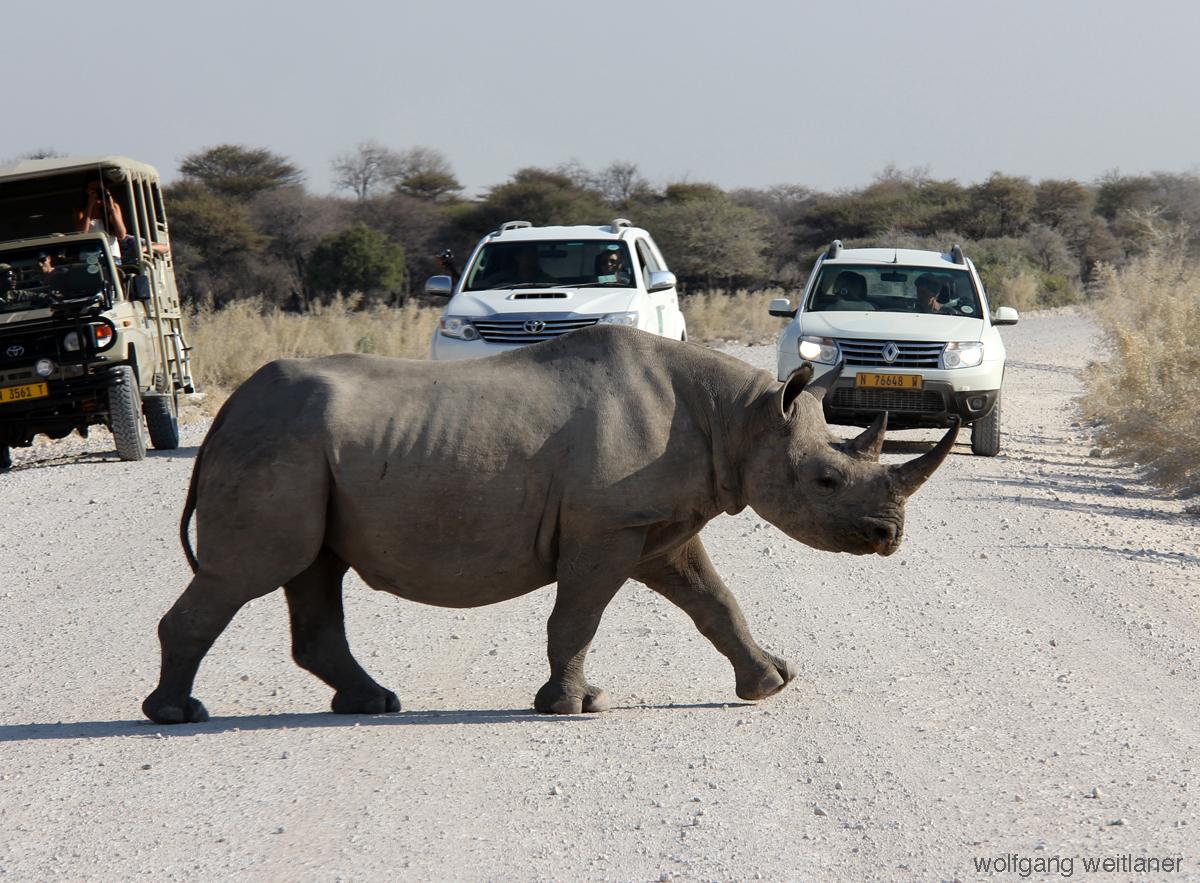 rhino-etosha.namibia