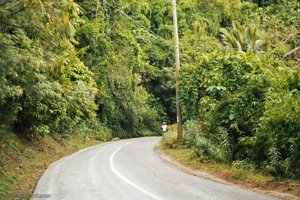 Montserrat-rainforest