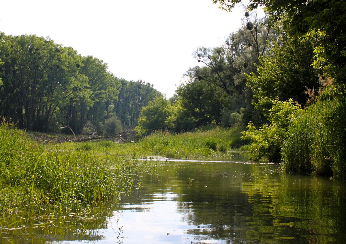 Nationalpark Donauauen Orth Nieder 246 Sterreich