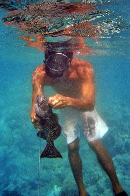 Speerfischer in der Lagune von Fakarava