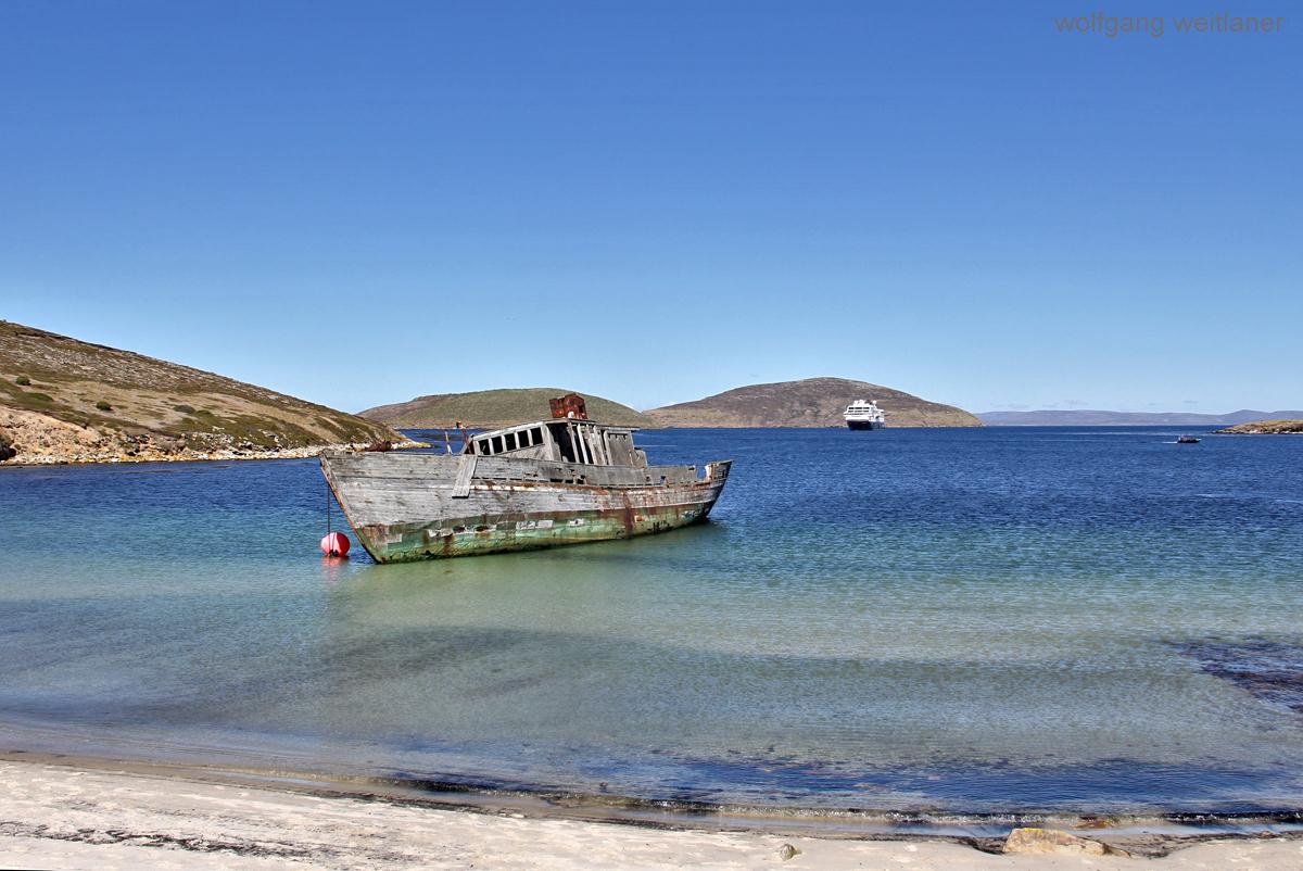 New Island, Falkland Inseln, Südatlantik