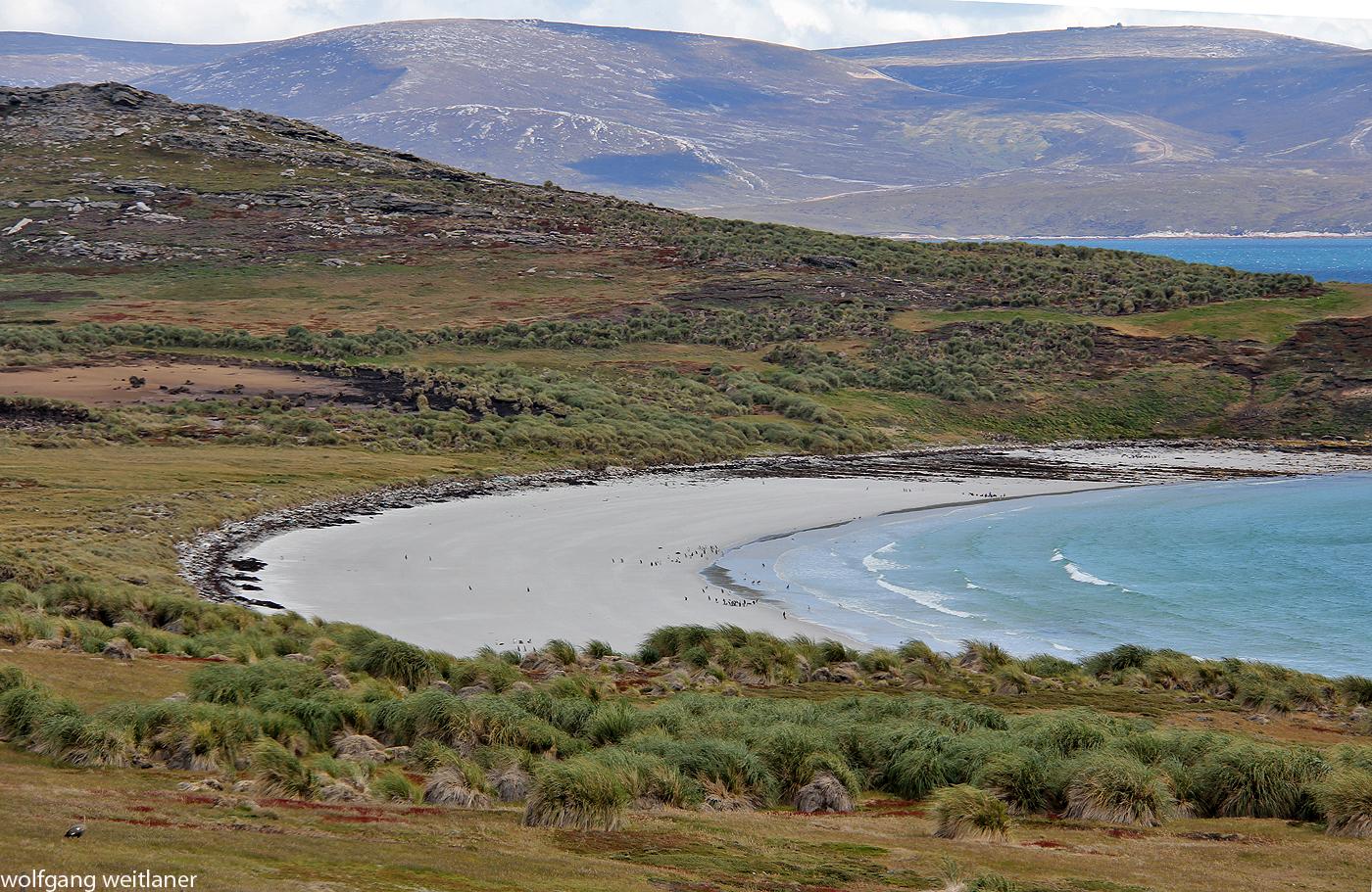 Carcass Island, Falkland Inseln, Südatlantik