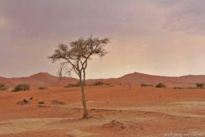 Sanddünen in der Namib-Wüste, Sossusvlei, Namibia