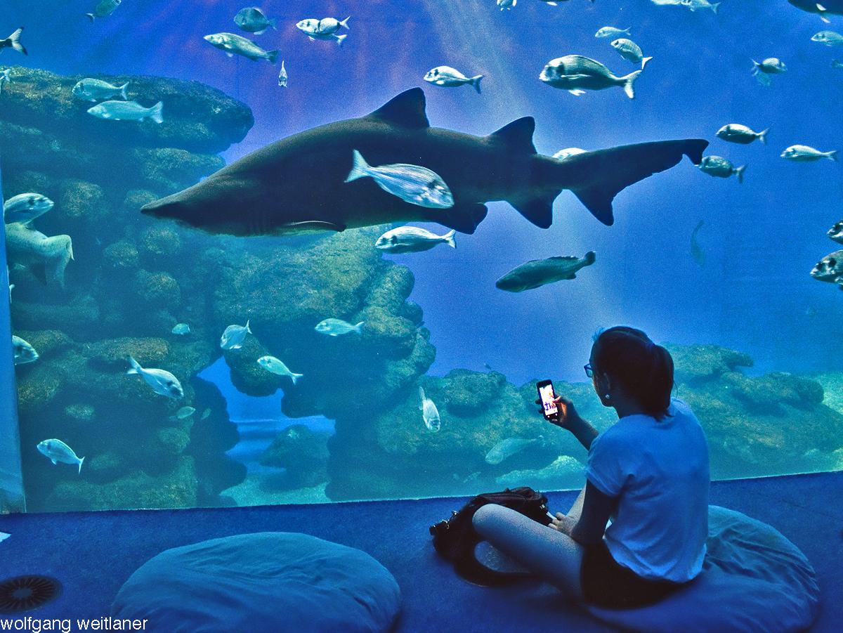 Photos vom Aquarium Palma de Mallorca, Mallorca, Balearen
