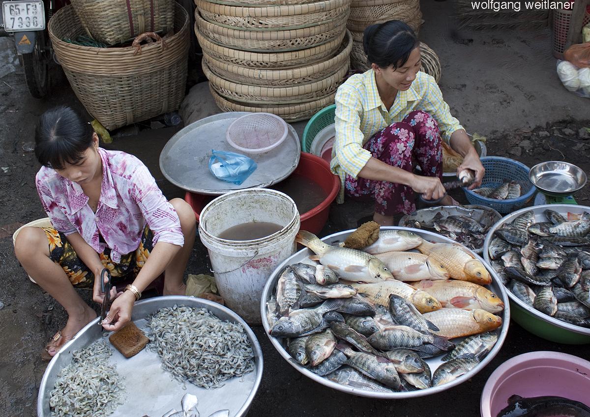 Mekong-Delta Fische