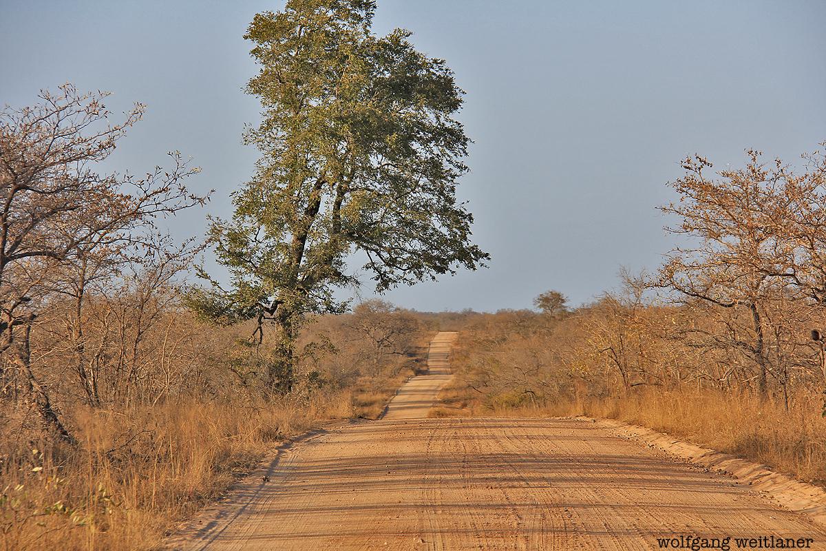 Aus dem Auto - kruger nationalpark Südafrika