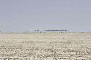 Kein Wasser, Etosha-Nationalpark, Namibia