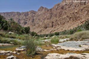 Wasser in der Wüste, Wadi Tiwi, Oman