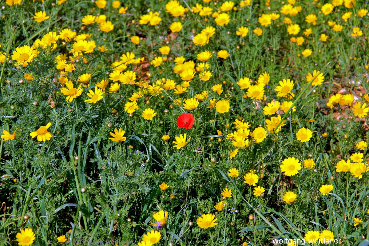 Blumen Zypern