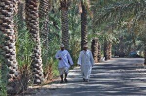 Im Dattelpalmenhain, Al Hamra, Oman