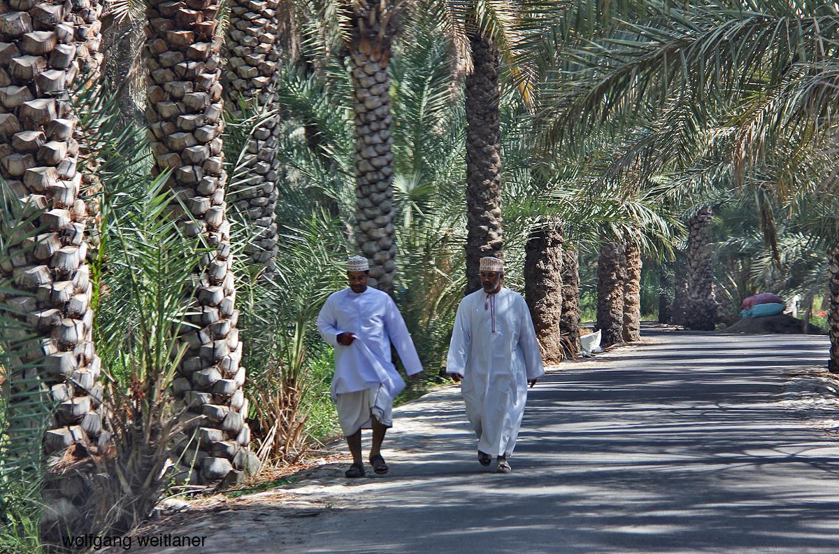 Dattelpalmhain Oman