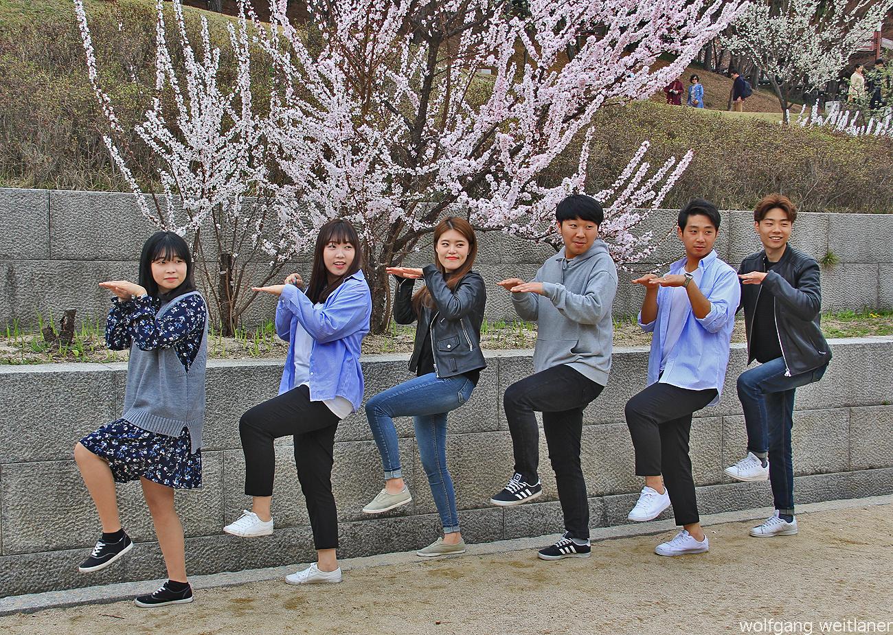 Springfever, Kirschblütenfest, Gangneung, Korea