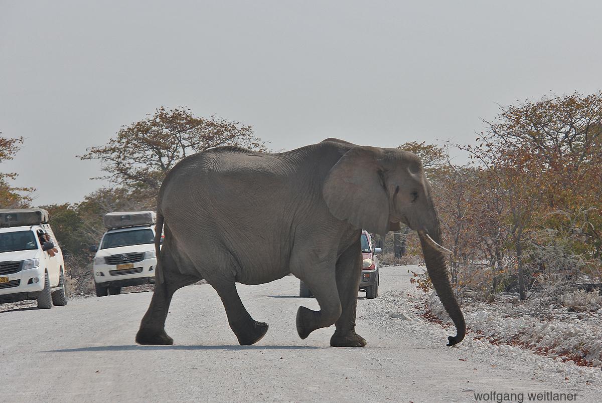Elefanten im Etosha Nationalpark, Namibia
