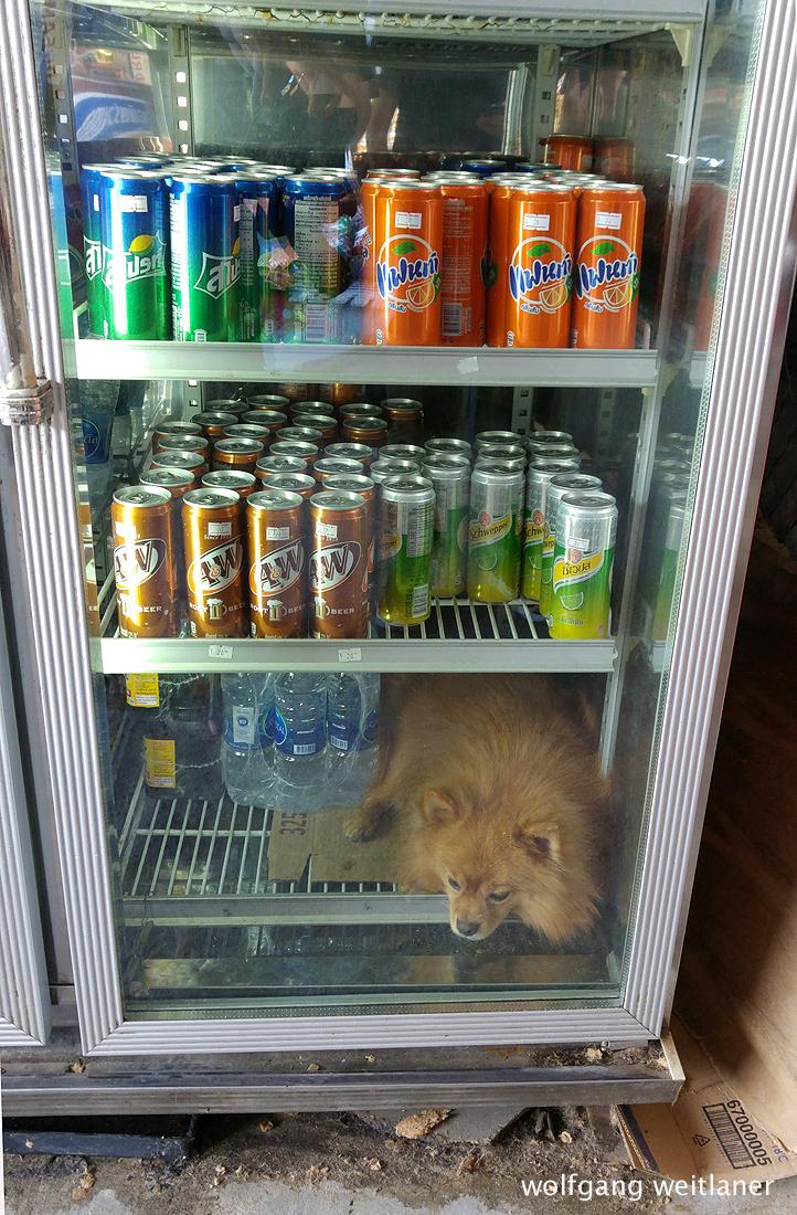 Hund im Eiskasten