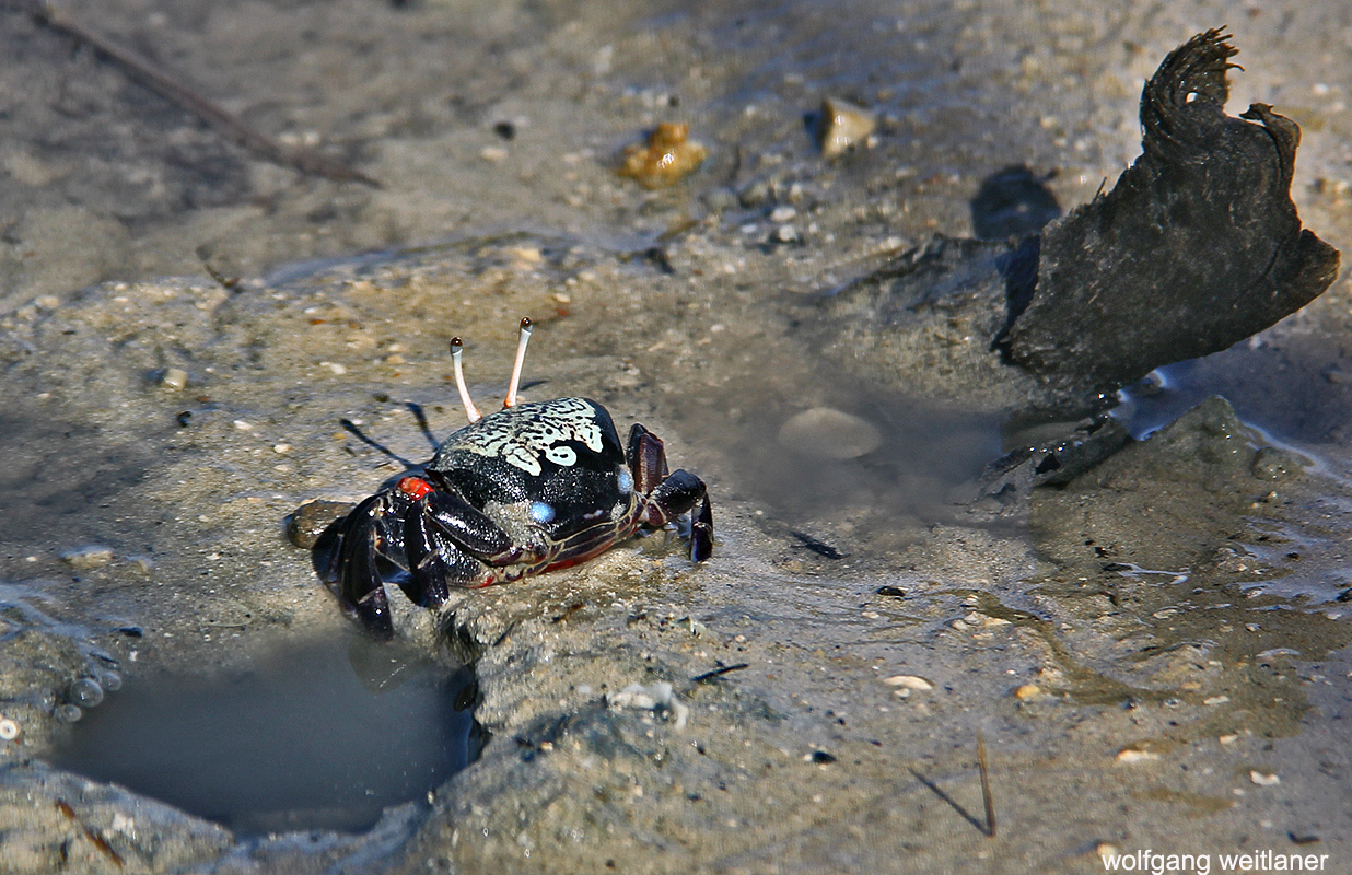 360-Grad-Rundumblick: Krabbe in Fiji, Fiji, Südsee
