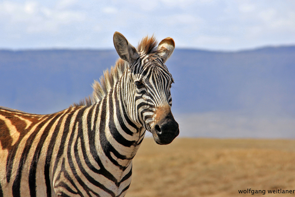 Ngorongoro Krater Tansania
